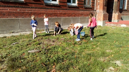 Sadzenie krokusów przed szkołą